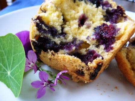 muffins2_web