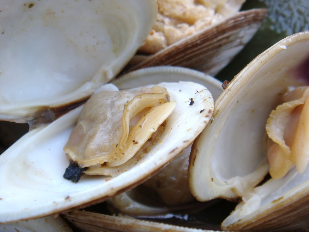 Steamed Clams in a Beer, Lemon and Garlic Broth | Boston Food & Whine