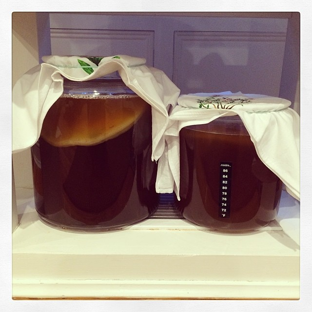 Brewing Kombucha